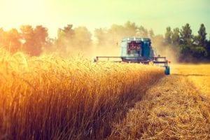 Ngành nông nghiệp tại Úc luôn cần nguồn nhân lực lao động lớn