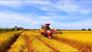 Kinh nghiệm xuất khẩu lao động Úc ngành nông nghiệp