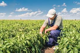 XKLĐ Canada ngành nông nghiệp