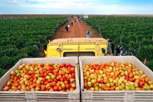 Xuất khẩu lao động Úc ngành nông nghiệp