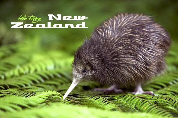 biểu tượng của new zealand, biểu tượng new zealand, biểu tượng của new zealand là gì, biểu tượng của nước new zealand, new zealand biểu tượng, con vật biểu tượng của new zealand, dương xỉ bạc, chim kiwi, chim kiwi biểu tượng